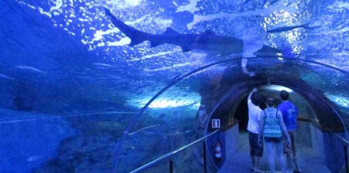 Caminata preciosa por la Concha, el puerto y de repente uno llega al fondo del fondo, al acuario de Donosti. Un descenso a las profundidades. Es tremendo, pero claro, uno se pone a pensar y se pregunta si no estaría mejor ese enorme animalito por ahí en el mar abierto.