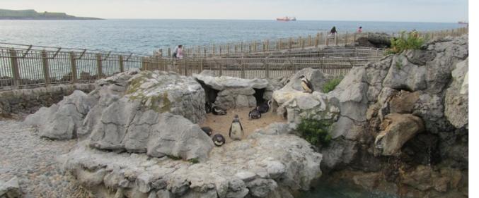 Muchos paisanos y visitantes se preguntan en Santander qué demonios hace una colonia de pingüinos por ahí en medio. Nadie o casi nadie conoce el verdadero secreto. Es hora de desvelarlo.