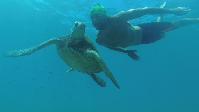 Christian Hawai tortuga